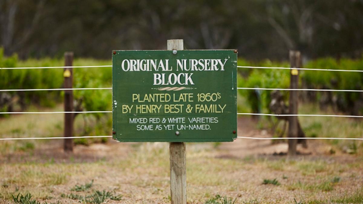 bests-wines-nursery-block